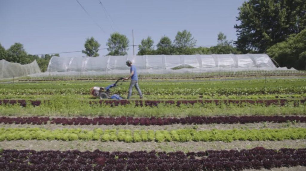 Chapter 1 Market Gardening